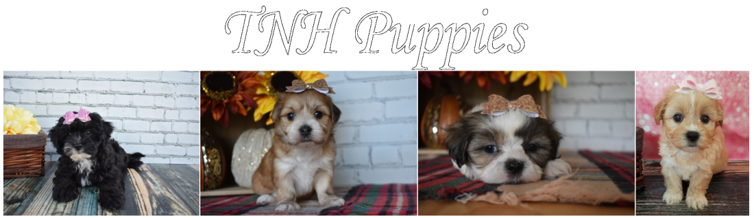 TNH Puppies